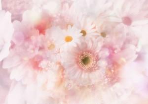 ameblo_pink_hana